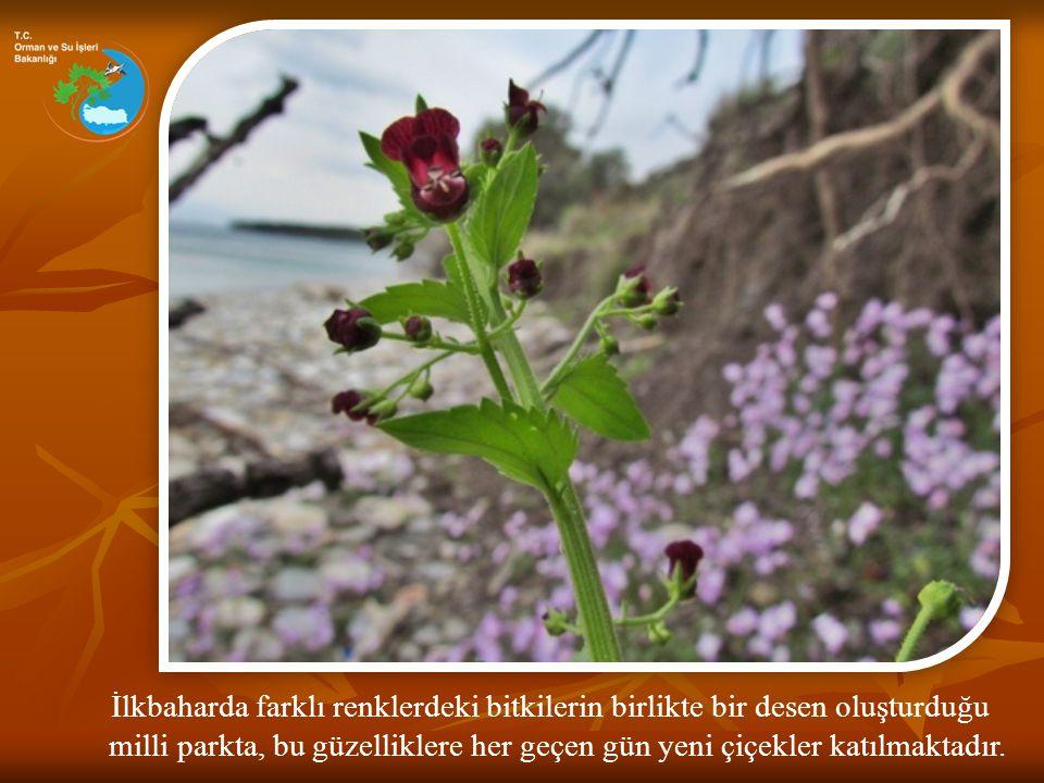 İlkbaharda farklı renklerdeki bitkilerin birlikte bir desen oluşturduğu
