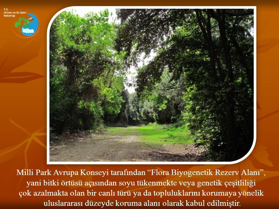 Milli Park Avrupa Konseyi tarafından Flora Biyogenetik Rezerv Alanı ,