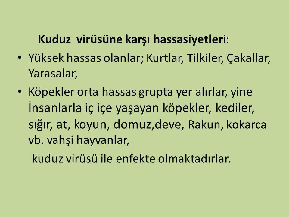 Kuduz virüsüne karşı hassasiyetleri: