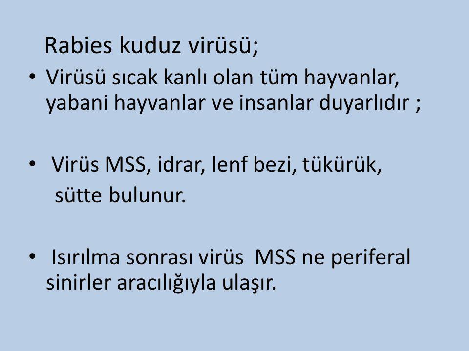 Rabies kuduz virüsü; Virüsü sıcak kanlı olan tüm hayvanlar, yabani hayvanlar ve insanlar duyarlıdır ;