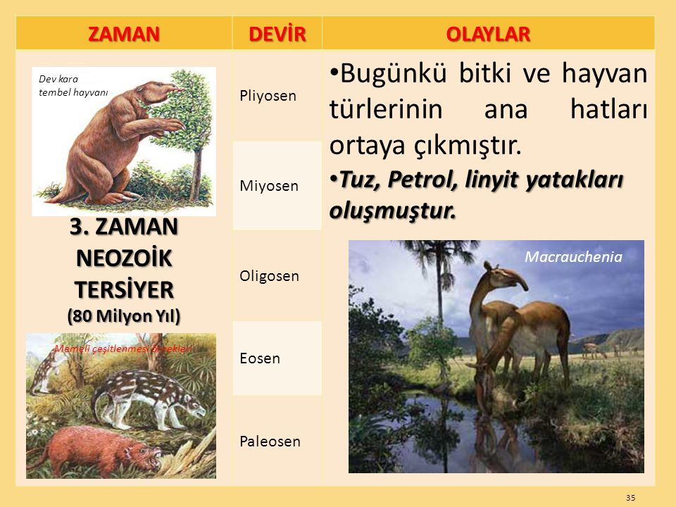 Bugünkü bitki ve hayvan türlerinin ana hatları ortaya çıkmıştır.