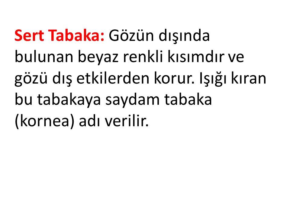 Sert Tabaka: Gözün dışında bulunan beyaz renkli kısımdır ve gözü dış etkilerden korur.