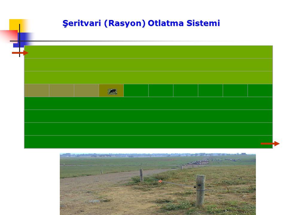 Şeritvari (Rasyon) Otlatma Sistemi