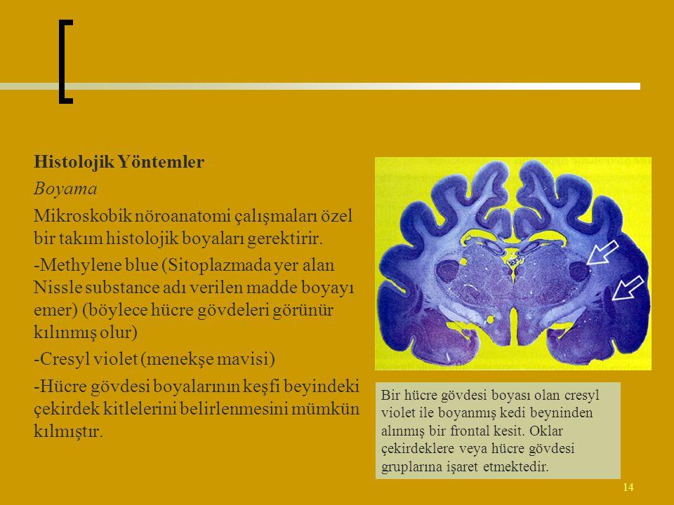 -Cresyl violet (menekşe mavisi)