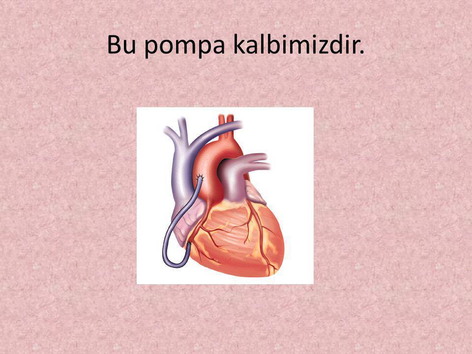 Bu pompa kalbimizdir.