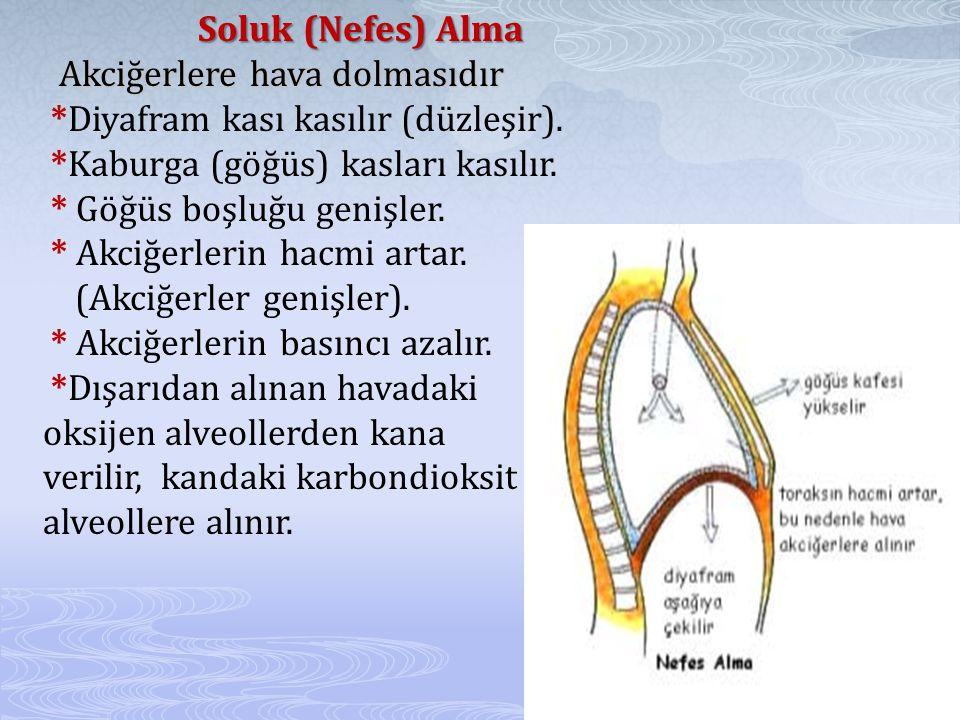 Soluk (Nefes) Alma Akciğerlere hava dolmasıdır