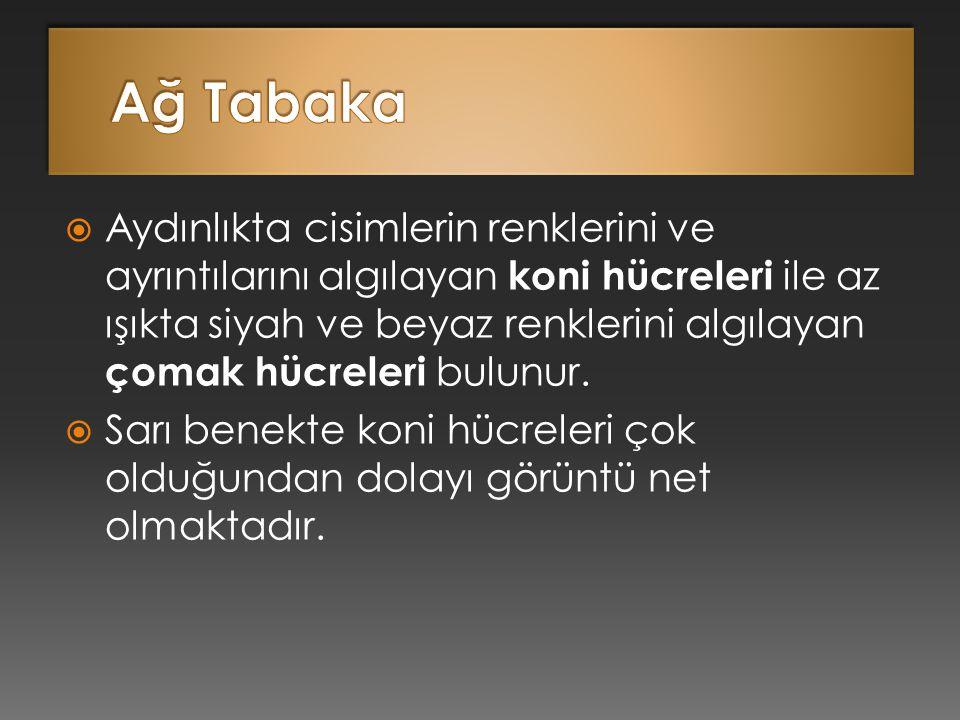 Ağ Tabaka