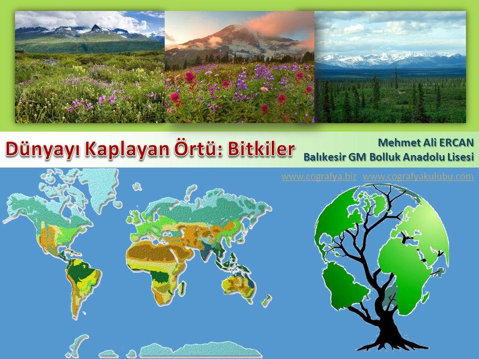 Dünyayı Kaplayan Örtü: Bitkiler