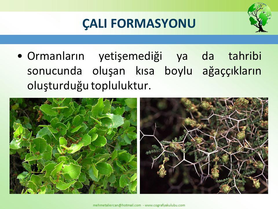 ÇALI FORMASYONU Ormanların yetişemediği ya da tahribi sonucunda oluşan kısa boylu ağaççıkların oluşturduğu topluluktur.