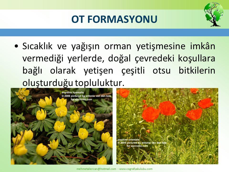 OT FORMASYONU