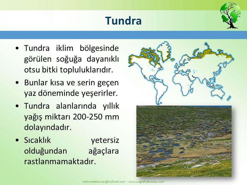 Tundra Tundra iklim bölgesinde görülen soğuğa dayanıklı otsu bitki topluluklarıdır. Bunlar kısa ve serin geçen yaz döneminde yeşerirler.