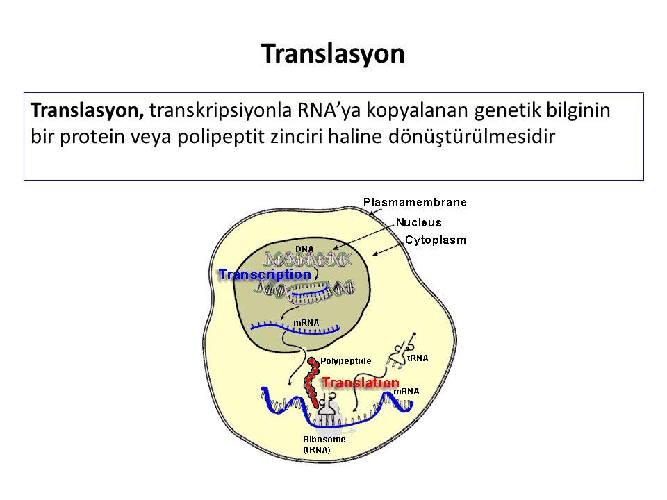 Translasyon Translasyon, transkripsiyonla RNA'ya kopyalanan genetik bilginin bir protein veya polipeptit zinciri haline dönüştürülmesidir.