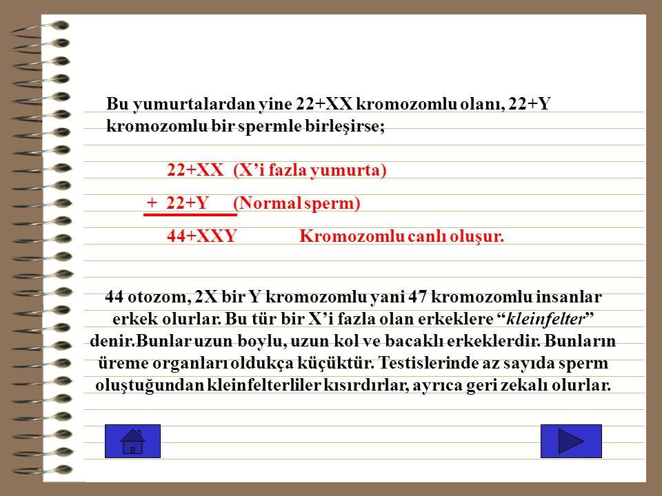 Bu yumurtalardan yine 22+XX kromozomlu olanı, 22+Y kromozomlu bir spermle birleşirse;