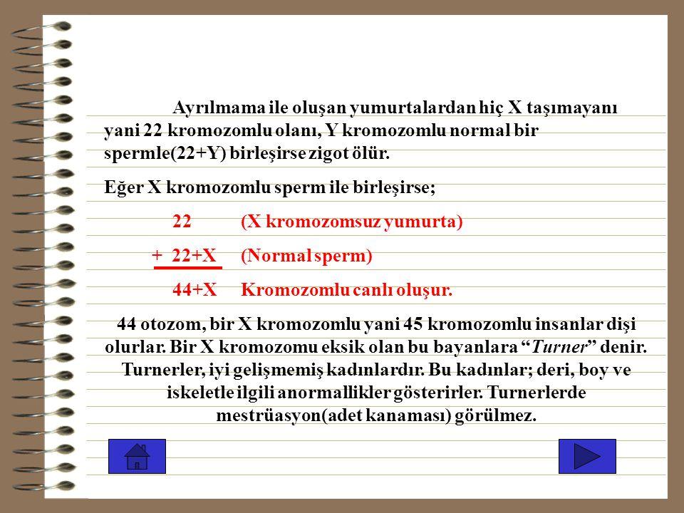 Ayrılmama ile oluşan yumurtalardan hiç X taşımayanı yani 22 kromozomlu olanı, Y kromozomlu normal bir spermle(22+Y) birleşirse zigot ölür.