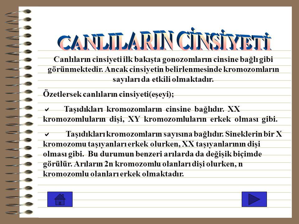 CANLILARIN CİNSİYETİ