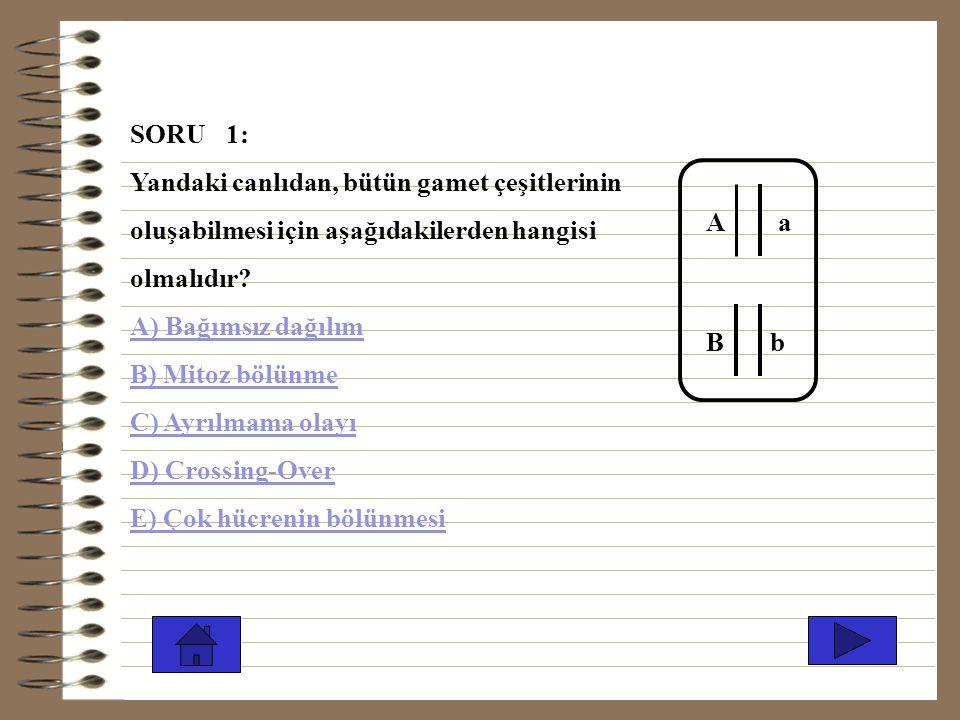 SORU 1: Yandaki canlıdan, bütün gamet çeşitlerinin. oluşabilmesi için aşağıdakilerden hangisi. olmalıdır