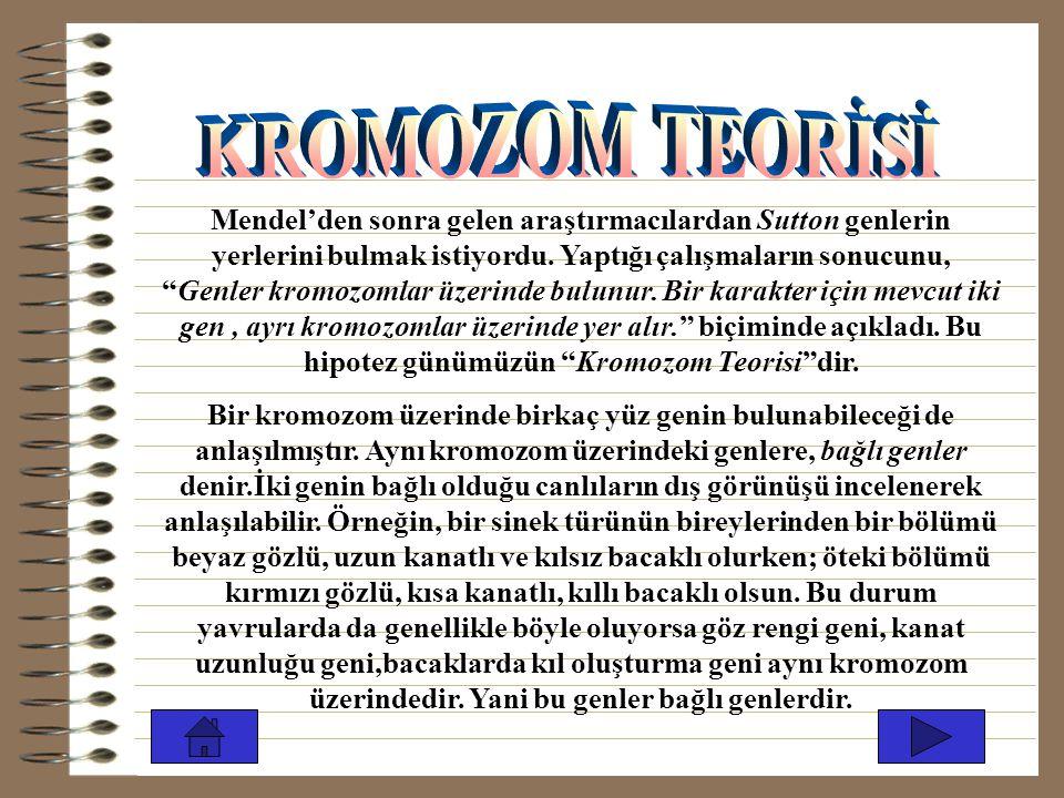 KROMOZOM TEORİSİ
