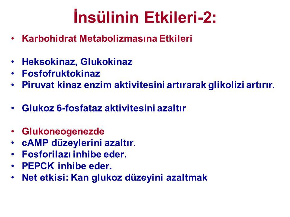 İnsülinin Etkileri-2: Karbohidrat Metabolizmasına Etkileri