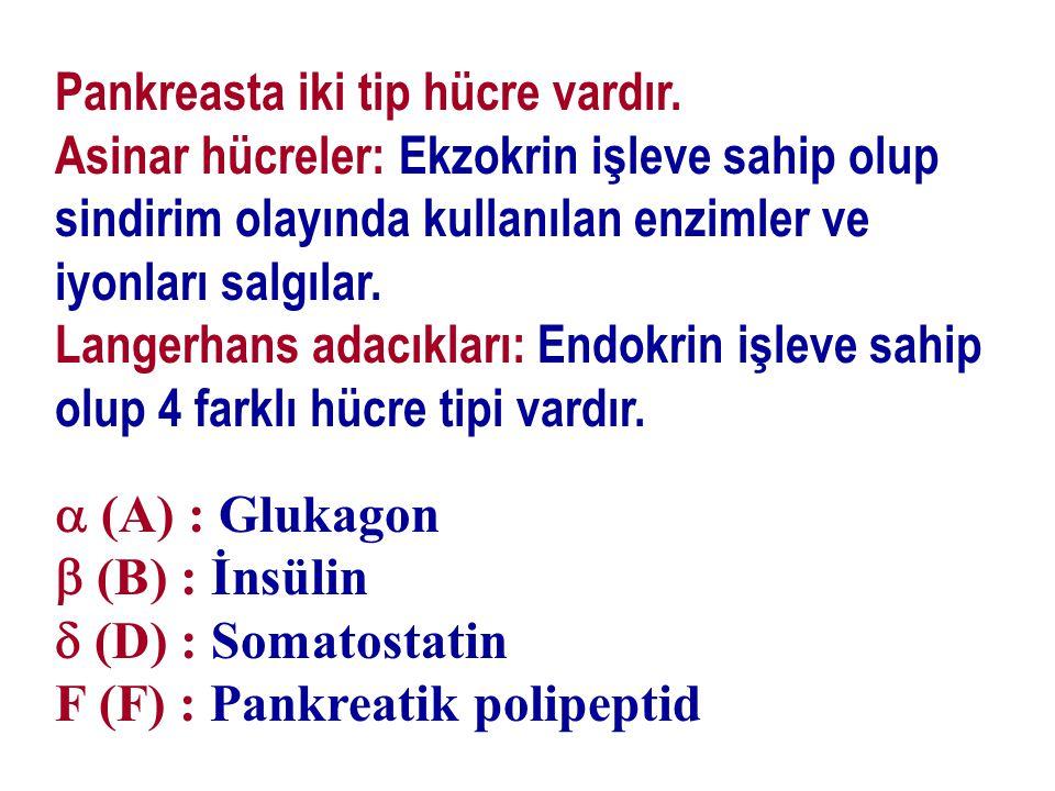 Pankreasta iki tip hücre vardır.