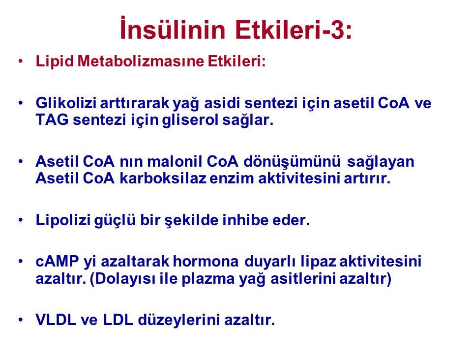 İnsülinin Etkileri-3: Lipid Metabolizmasıne Etkileri: