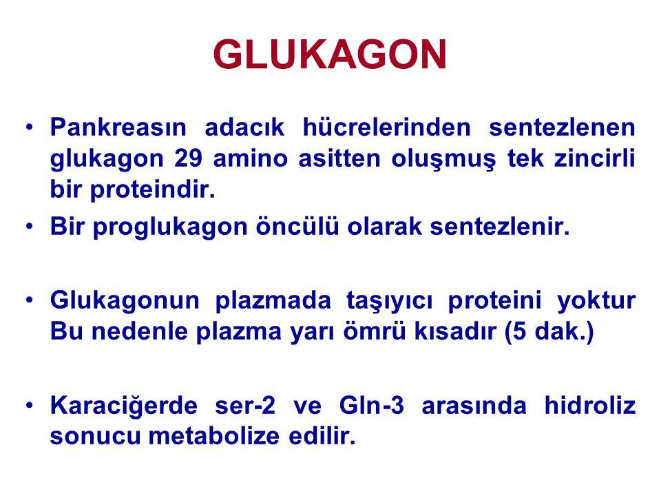 GLUKAGON Pankreasın adacık hücrelerinden sentezlenen glukagon 29 amino asitten oluşmuş tek zincirli bir proteindir.