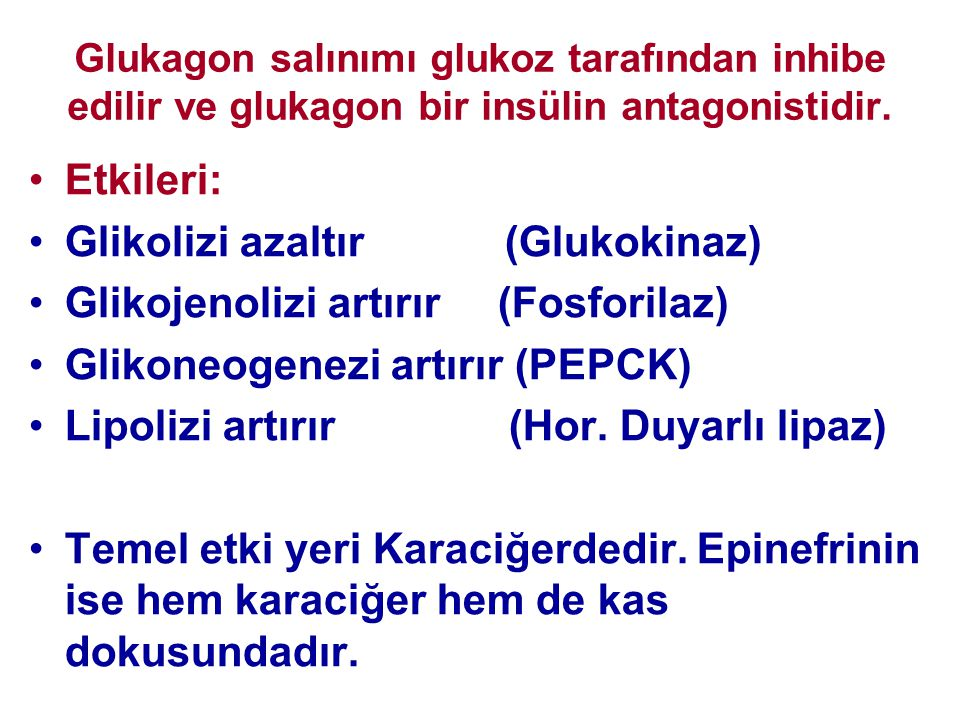 Glikolizi azaltır (Glukokinaz) Glikojenolizi artırır (Fosforilaz)
