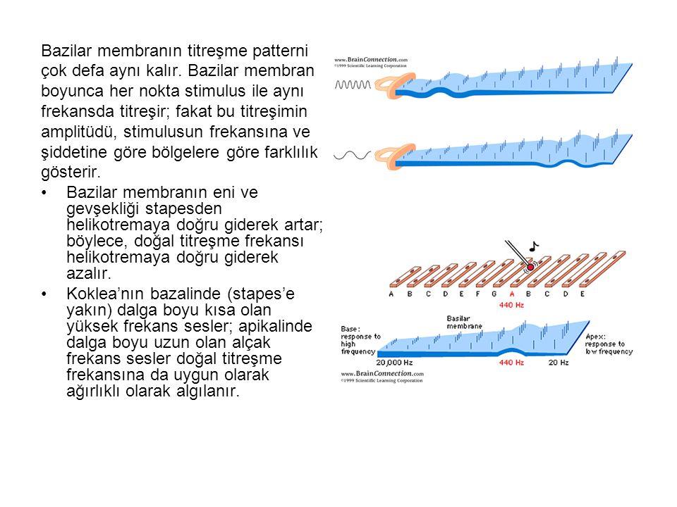 Bazilar membranın titreşme patterni