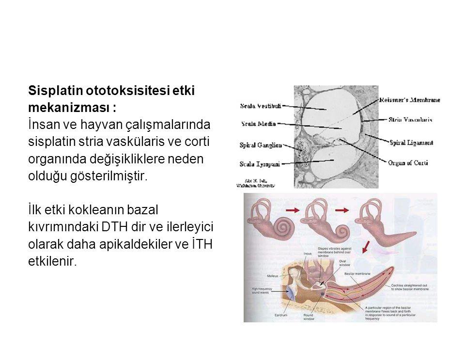 Sisplatin ototoksisitesi etki