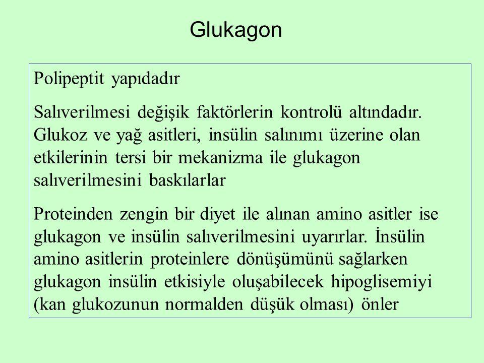 Glukagon Polipeptit yapıdadır