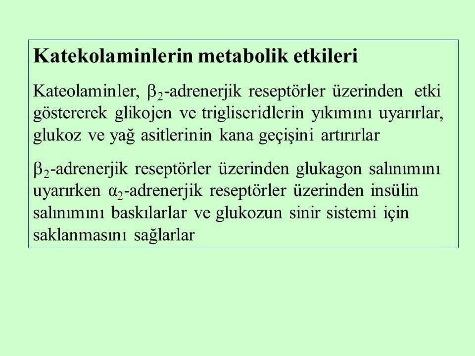 Katekolaminlerin metabolik etkileri