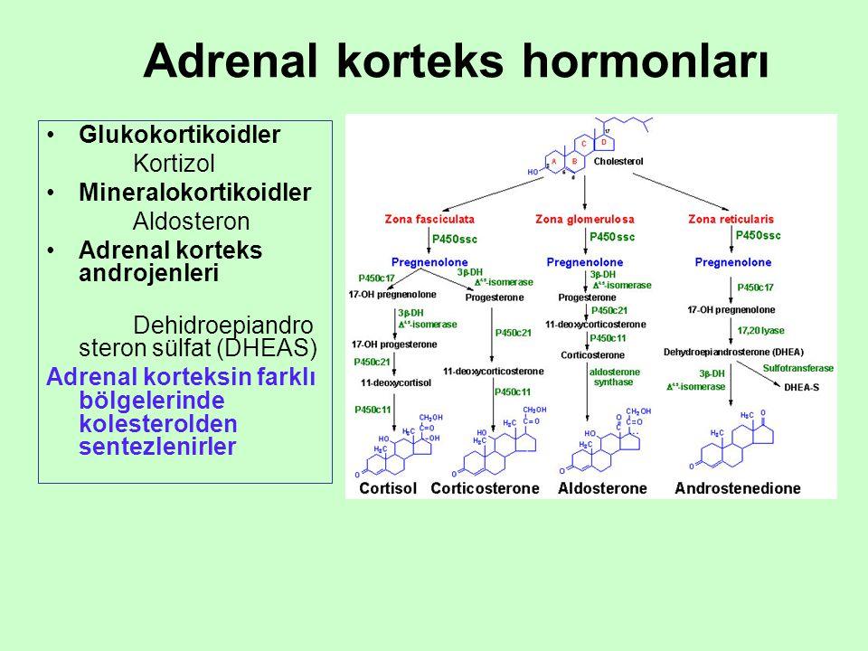 Adrenal korteks hormonları