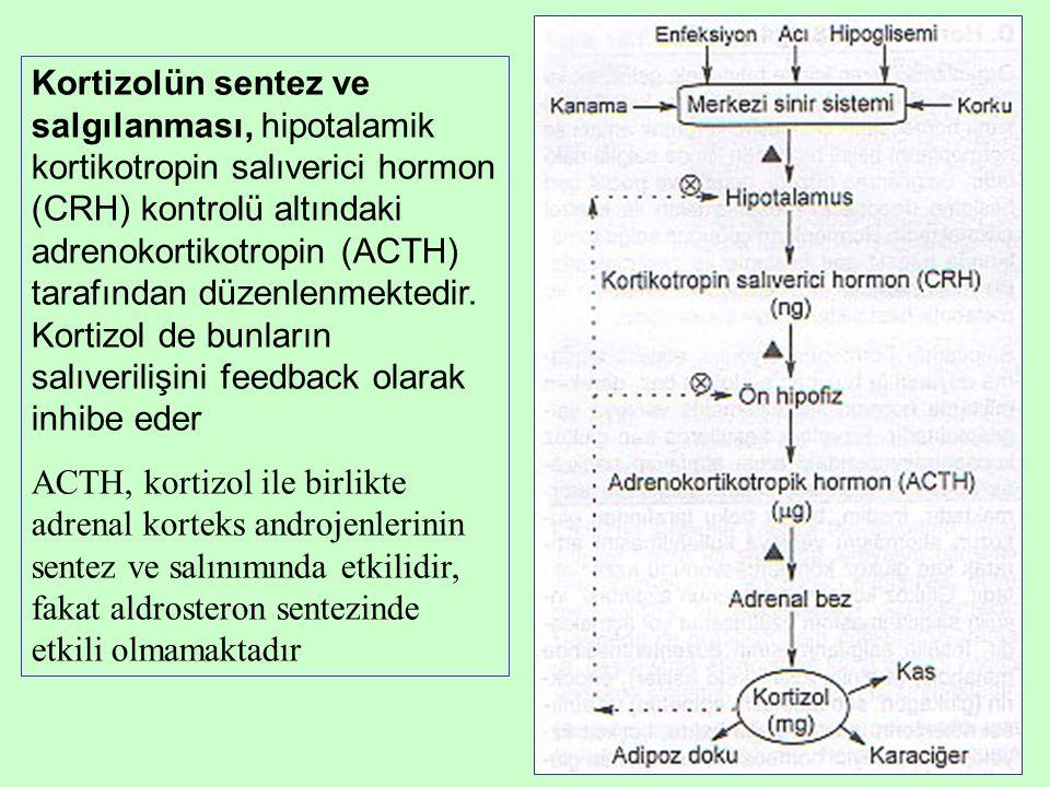 Kortizolün sentez ve salgılanması, hipotalamik kortikotropin salıverici hormon (CRH) kontrolü altındaki adrenokortikotropin (ACTH) tarafından düzenlenmektedir. Kortizol de bunların salıverilişini feedback olarak inhibe eder