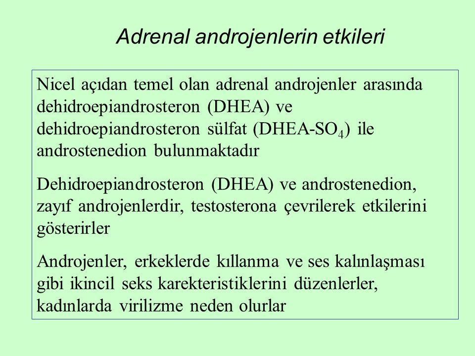 Adrenal androjenlerin etkileri