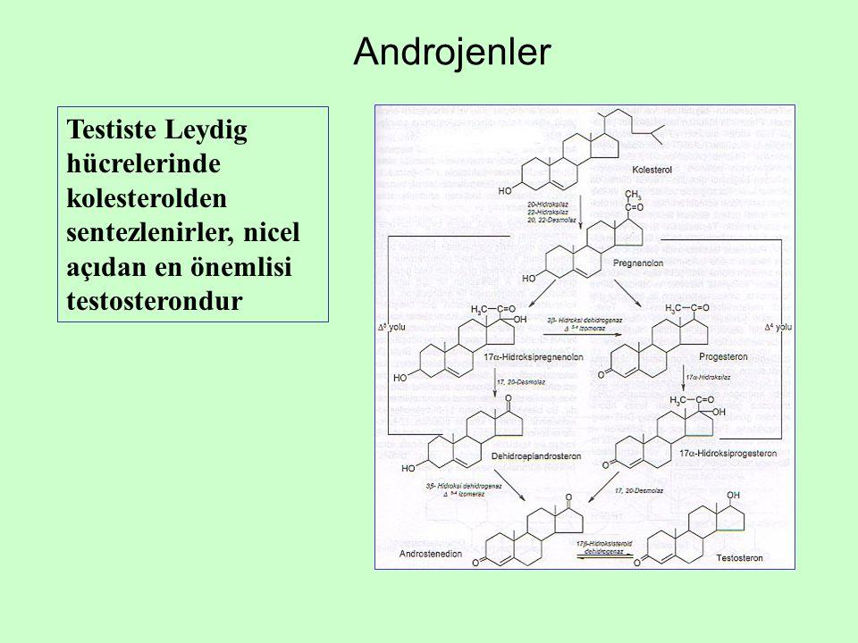 Androjenler Testiste Leydig hücrelerinde kolesterolden sentezlenirler, nicel açıdan en önemlisi testosterondur.