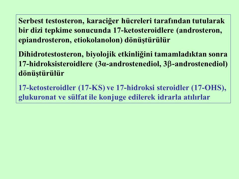 Serbest testosteron, karaciğer hücreleri tarafından tutularak bir dizi tepkime sonucunda 17-ketosteroidlere (androsteron, epiandrosteron, etiokolanolon) dönüştürülür