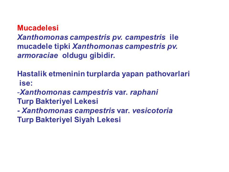 Mucadelesi Xanthomonas campestris pv. campestris ile. mucadele tipki Xanthomonas campestris pv. armoraciae oldugu gibidir.