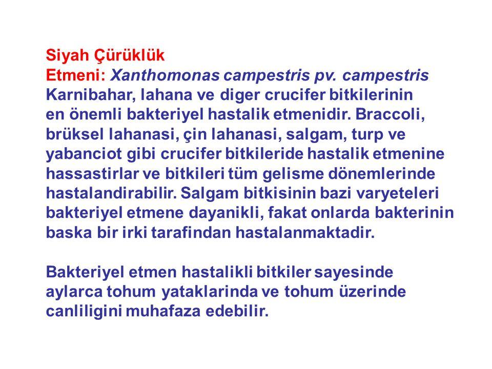 Siyah Çürüklük Etmeni: Xanthomonas campestris pv. campestris Karnibahar, lahana ve diger crucifer bitkilerinin.