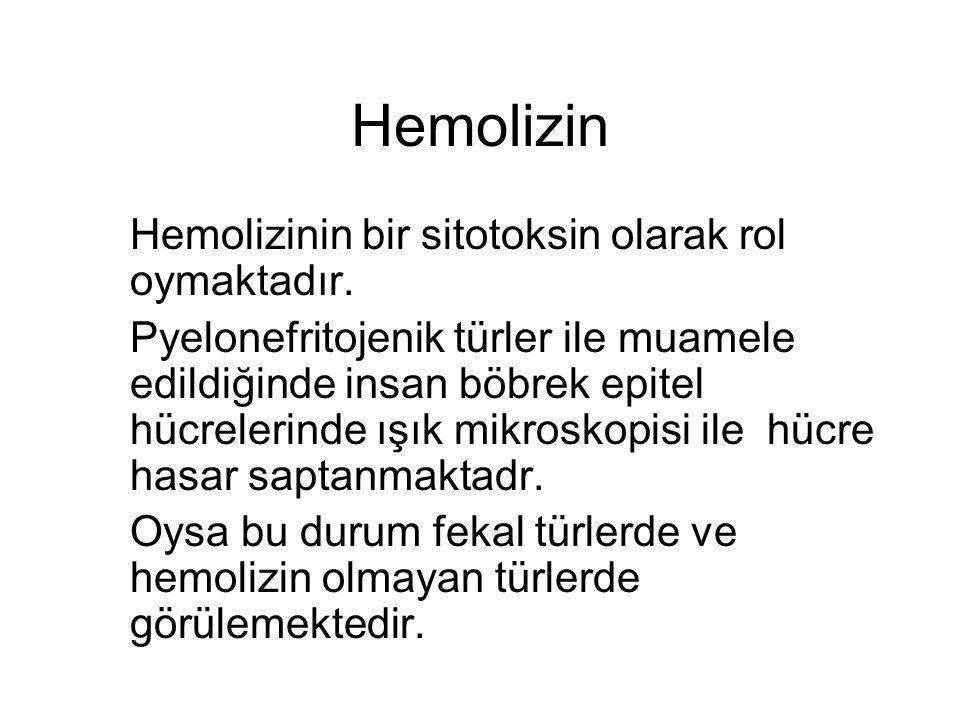 Hemolizin Hemolizinin bir sitotoksin olarak rol oymaktadır.