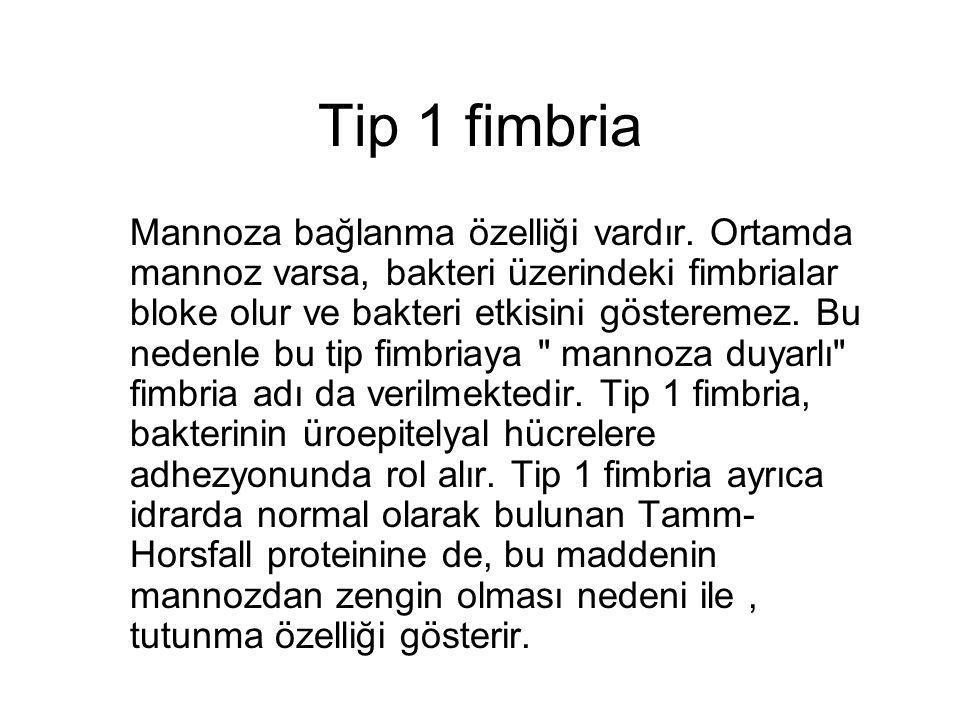 Tip 1 fimbria