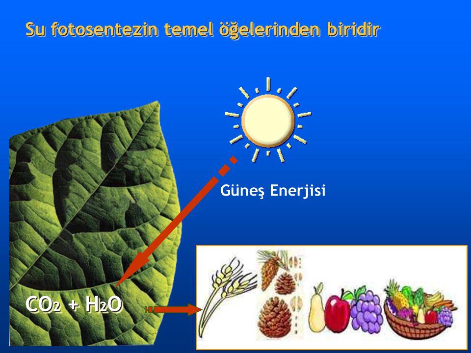 CO2 + H2O Su fotosentezin temel öğelerinden biridir Güneş Enerjisi