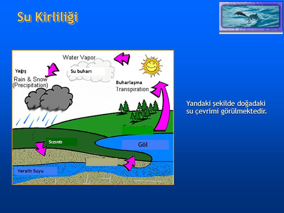 Su Kirliliği Yandaki şekilde doğadaki su çevrimi görülmektedir. Göl