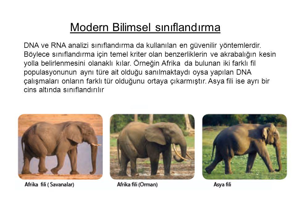 Modern Bilimsel sınıflandırma