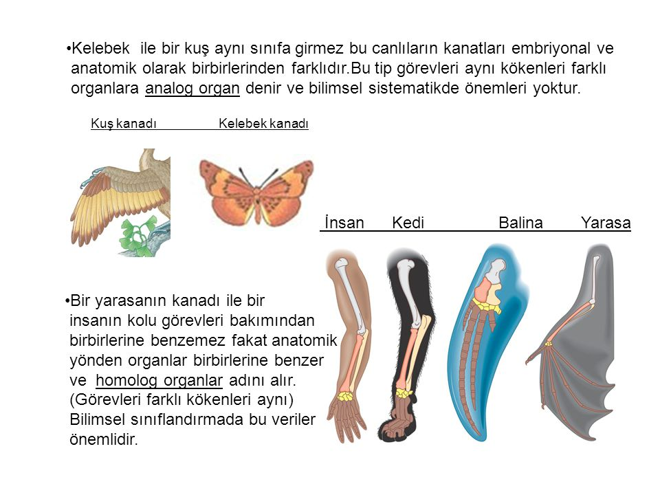 organlara analog organ denir ve bilimsel sistematikde önemleri yoktur.