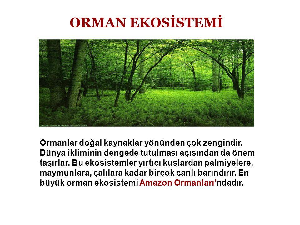 ORMAN EKOSİSTEMİ