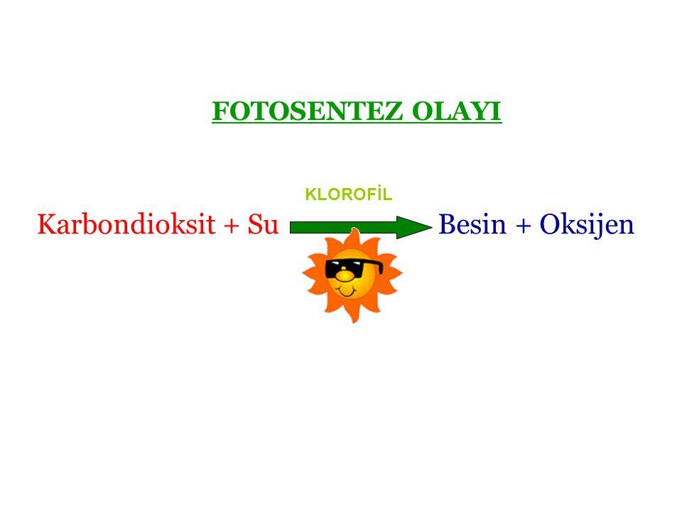 Karbondioksit + Su Besin + Oksijen