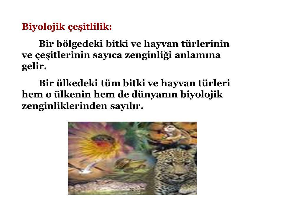 Biyolojik çeşitlilik: