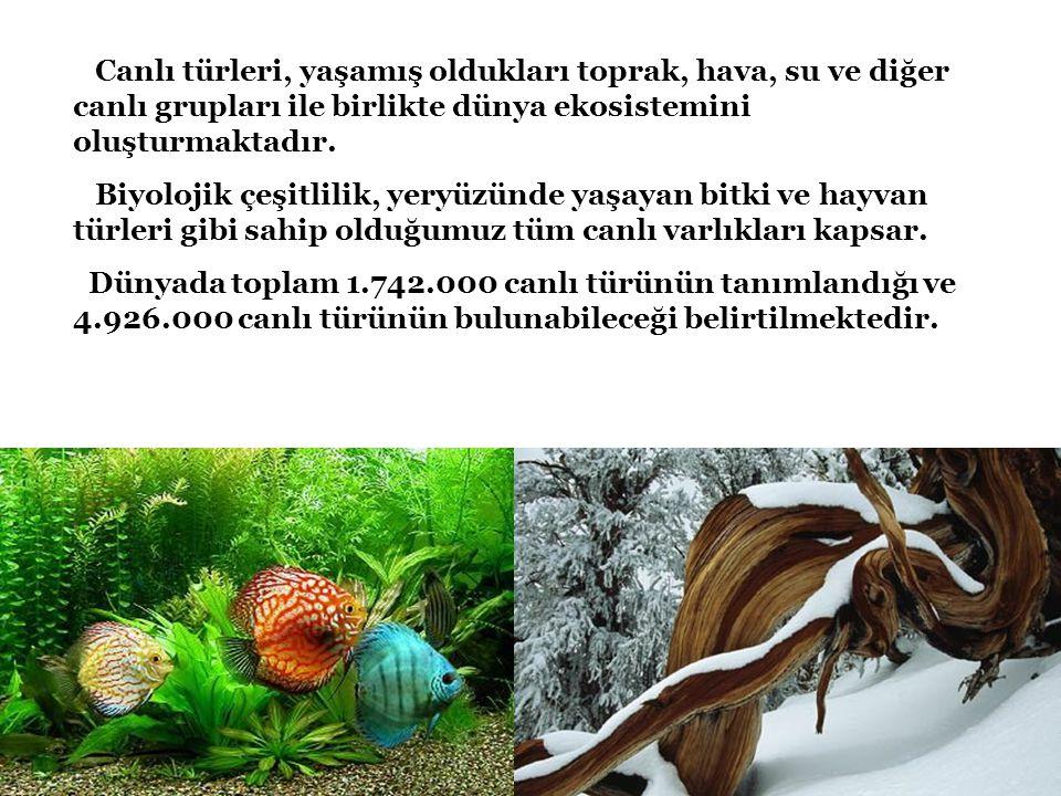 Canlı türleri, yaşamış oldukları toprak, hava, su ve diğer canlı grupları ile birlikte dünya ekosistemini oluşturmaktadır.