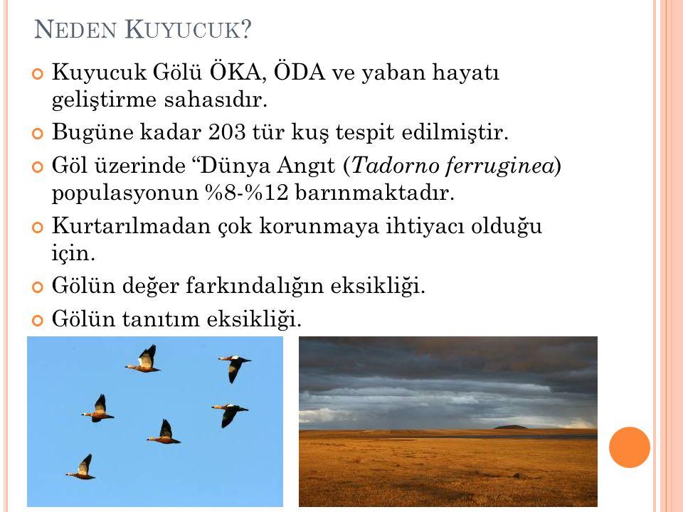 Neden Kuyucuk Kuyucuk Gölü ÖKA, ÖDA ve yaban hayatı geliştirme sahasıdır. Bugüne kadar 203 tür kuş tespit edilmiştir.