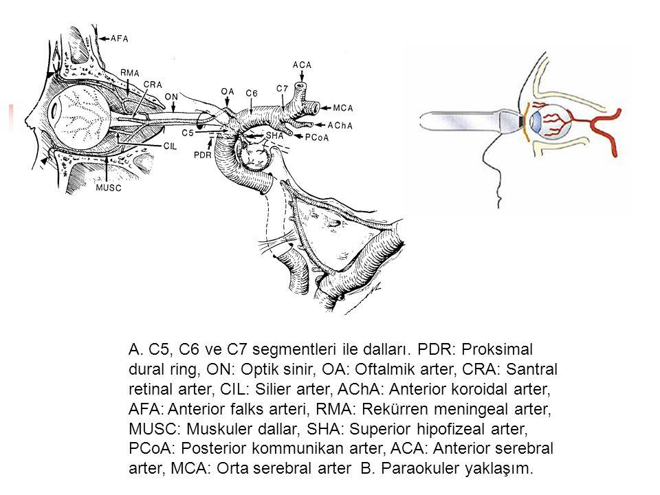 A. C5, C6 ve C7 segmentleri ile dalları