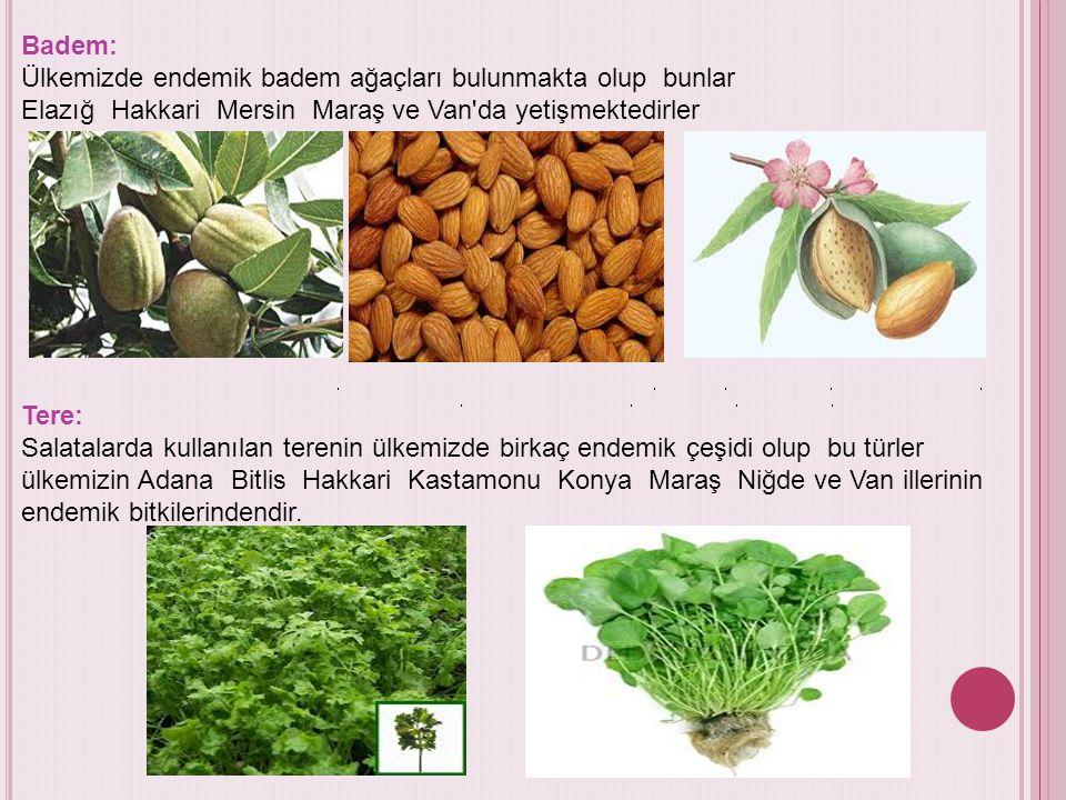 Badem: Ülkemizde endemik badem ağaçları bulunmakta olup bunlar Elazığ Hakkari Mersin Maraş ve Van da yetişmektedirler